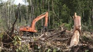 Indonesia deforestation