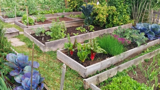 Over the years, many local residents have built community gardens in the disused space, growing fruit, vegetables and flowers.