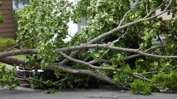 Post-tropical storm Arthur brought high winds, which toppled many trees around Nova Scotia.