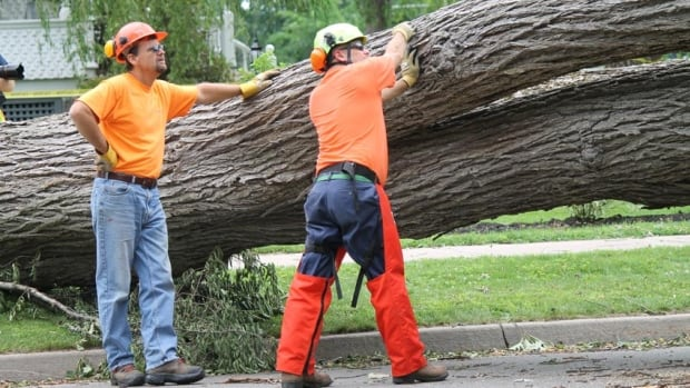 Two workers in Fredericton clear a large tree that fell on Lansdowne Avenue during post-tropical storm Arthur.
