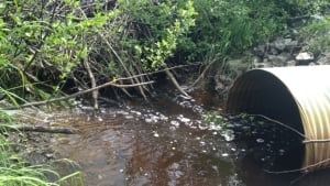 Beaver dam blocks culvert by Hazen McCrea's home