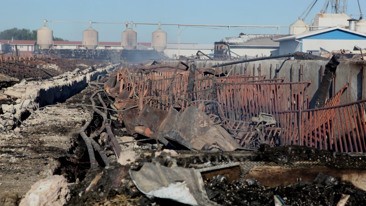 4,200 pigs killed in central Alberta barn fire - Edmonton ...