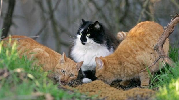 Pet food bank in Winnipeg in dire need of cat food | CBC News