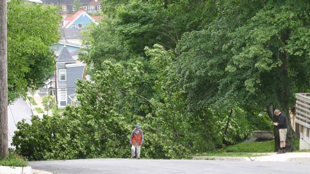 Dartmouth, N.S. residents examine a tree that toppled onto power lines by tropical storm Arthur on Saturday July 5, 2014.