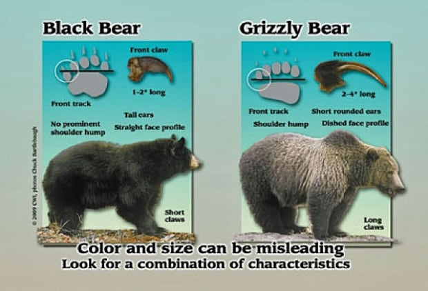 resizedimage600408-bearcompare.jpg