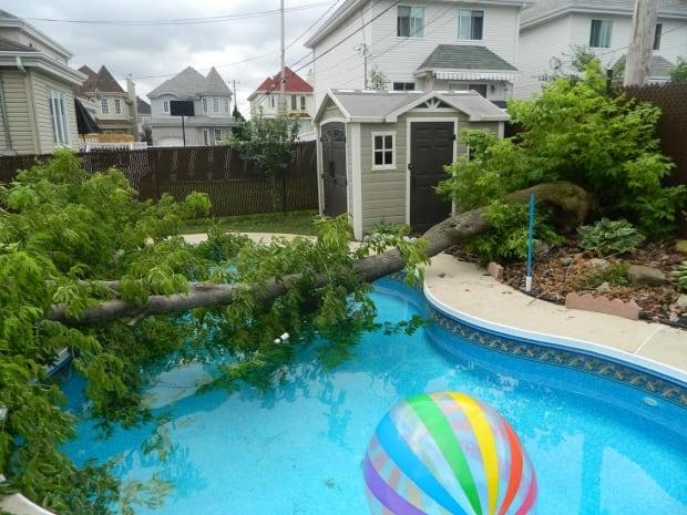 laval tree wind storm