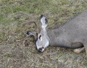 Edson poaching case