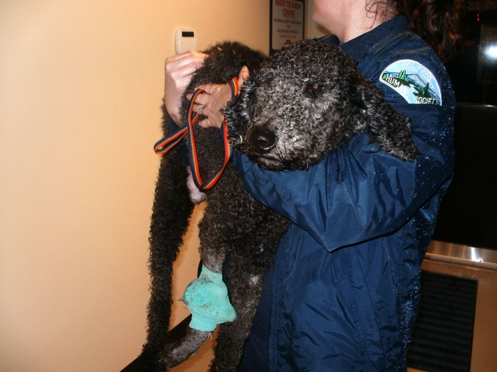 Bc Puppy Breeders Convicted Of Animal Cruelty In Us