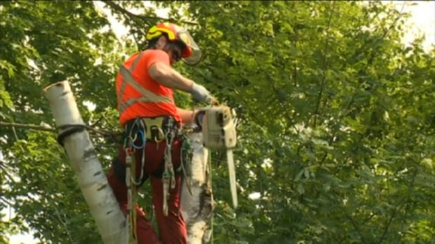 Nova Scotia Power crews are continuing to clean-up after post-tropical storm Arthur, but sporadic power outages are expected as storm damaged trees continue to fall on lines.