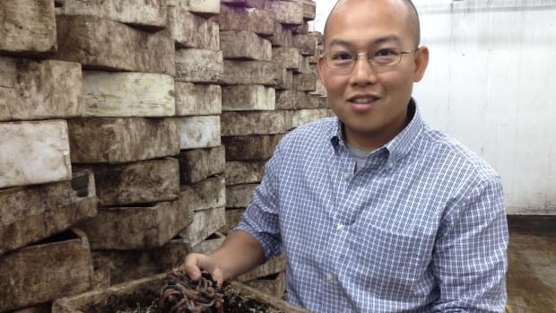 Tuan Huynh operates one of Canada's largest worm wholesale warehouses, Windsor Wholesale Bait in Windsor, Ont. He says the cool spring nights have resulted in fewer worms coming to the surface this year.