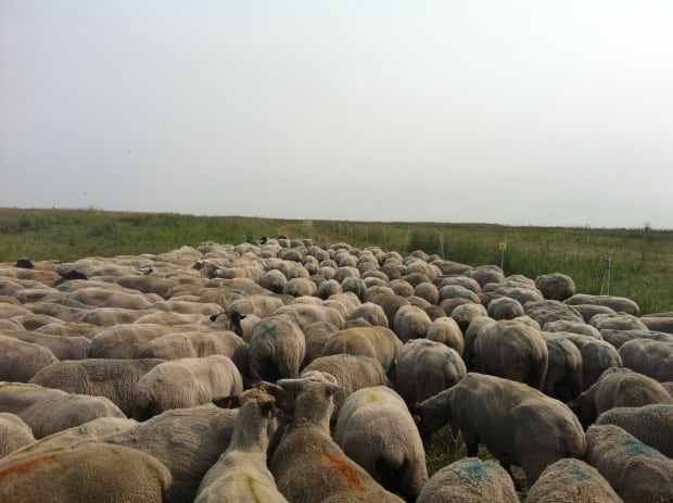 flock at the swale