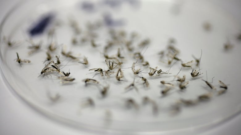 West Nile found in Oakland County mosquito pools