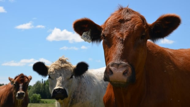Raising cattle can have advantages for the environment, say beef producers.