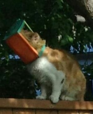 Cat with head in bird feeder