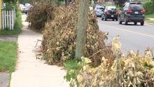 hl-tree-debris