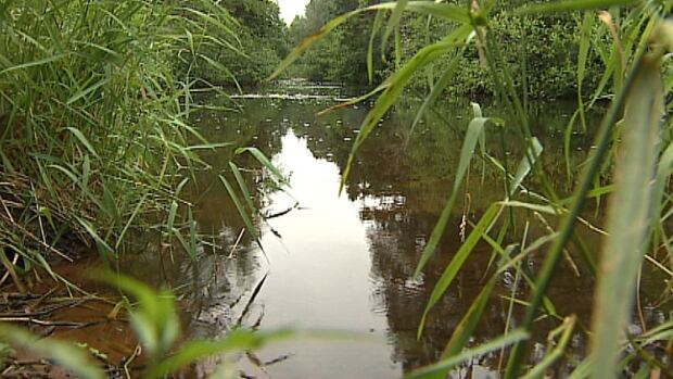 Fish in the Morell River are retreating to cooler, deeper pools.