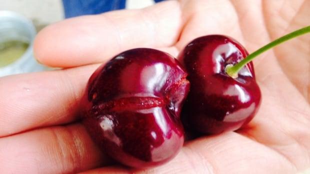 Split cherries