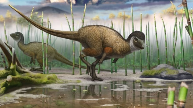 Kulindadromeus zabaikalicus, seen in this artist's reconstruction, was a turkey-sized plant-eating dinosaur that lived about 160 million years ago.