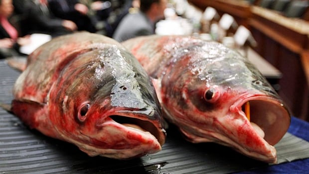 Asian carp have infested much of the Mississippi River basin and are threatening to gain a foothold in the Great Lakes through rivers and canals. If that happens, species native to Canada could be wiped out.