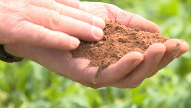 "Brian Ching says soil is ""more like a powder"" from the dry weather."
