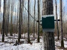 Owl recording device