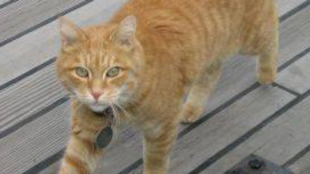 Erik the Red is a feline mascot, or Rodent Control Officer, that patrols retired hydrographic survey vessel CSS Acadia.