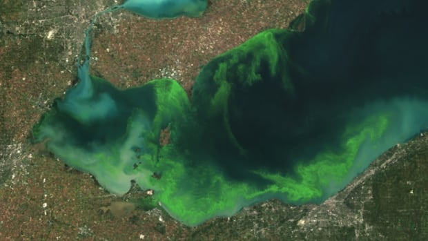This satellite image provided by the U.S. National Oceanic and Atmospheric Administration shows the algae bloom on Lake Erie in 2011, which the agency said was the worst in decades.