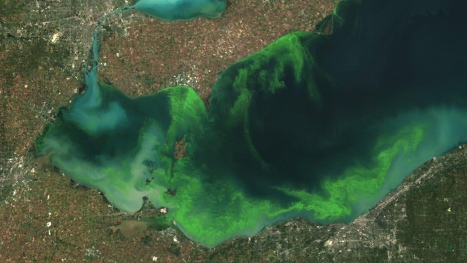 Algal bloom on Lake Erie in 2011