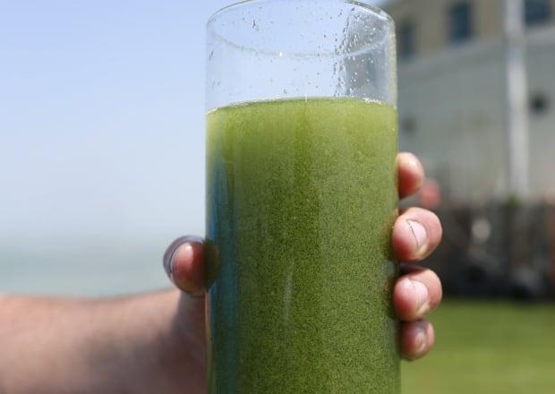 Blue-green algae Lake Erie Toledo Water Problems