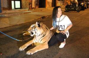 tasha-tiger-20140807