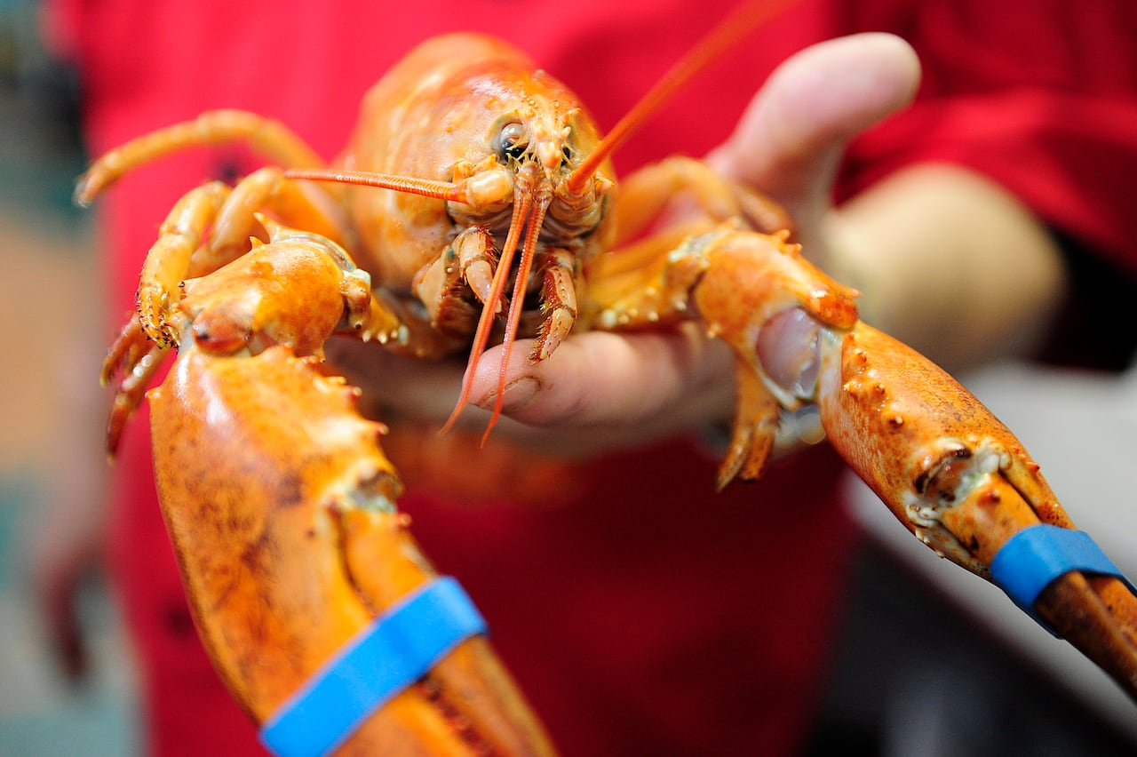 Atlantic Canada's seafood industry gets a boost as China lowers