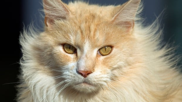 The Lion in Your Living Room will follow cats during a season in their life. The documentary will air on CBC's The Nature of Things.