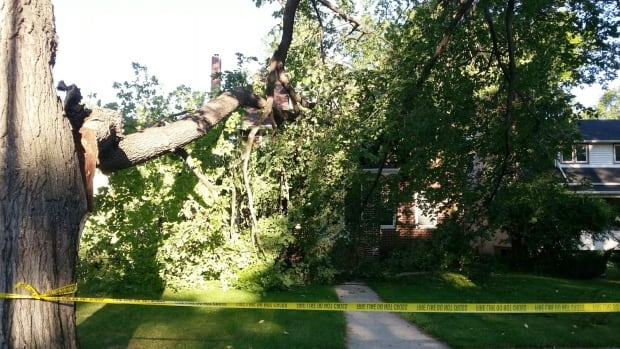 A tree in front of the Motkaluk home on Montrose Street, near Academy Road, collapsed at about 4:30 a.m. Monday.
