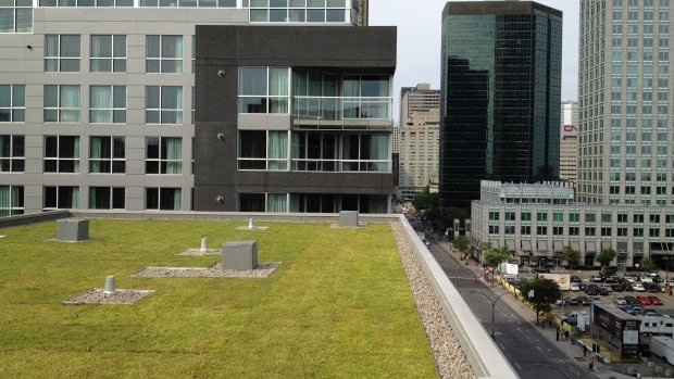 Owen Rose has designed several green roofs including this one in Montreal.