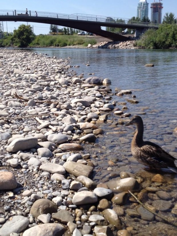 Elbow River Traverse
