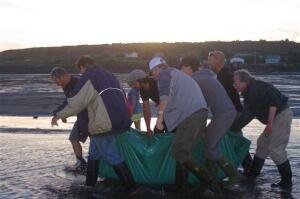 Dolphin rescue 2