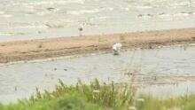Wabush lake sewage