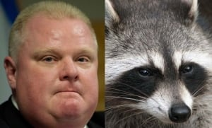 Rob Ford on raccoons