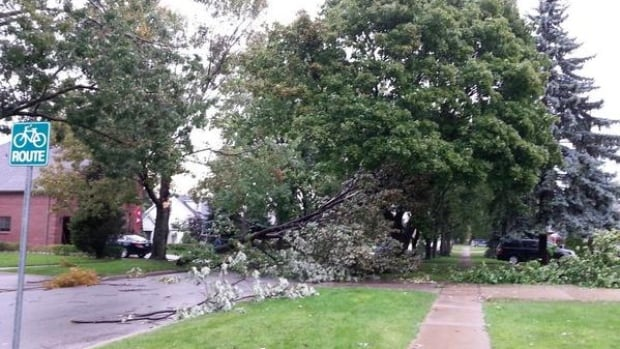Storm in the Windsor-Essex region came in with heavy rain, penny size hail and strong winds, downing trees and leaving thousands without power.
