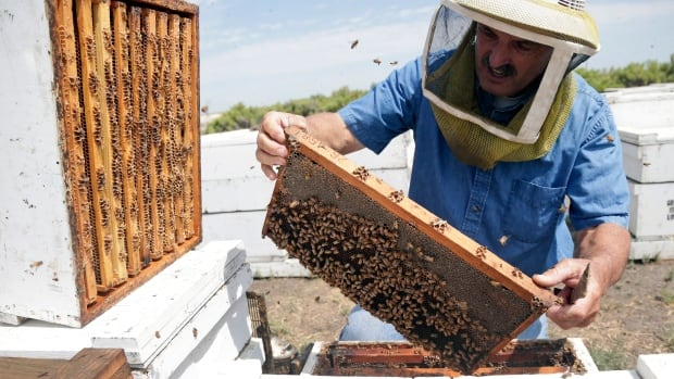 California is one of the country's biggest honey producers but a three-year drought has left hillsides barren and forced farmers to tear out orchards and leave fields fallow.
