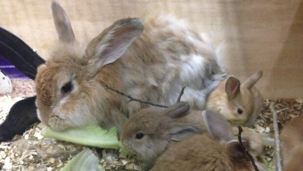 A rabbit infestation has left some residents in a Garson community puzzled. They're not sure who's responsible for controlling the size of the colony.