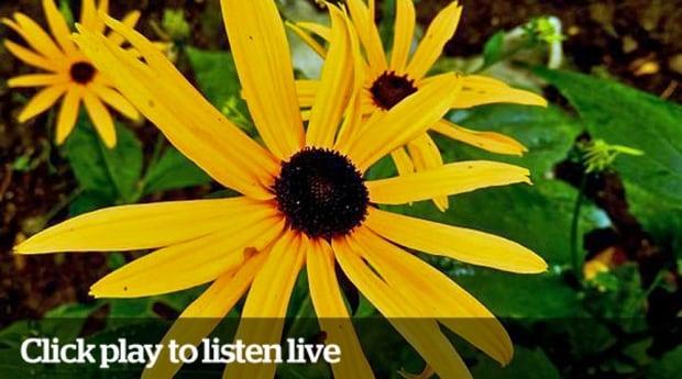Listen Live Flower August 25, 2014