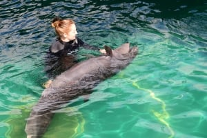 Chester - Vancouver Aquarium's rescued false killer whale - Aug. 28, 2014