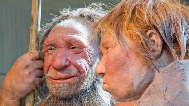 New research published in the journal Scientific Reports on Thursday says our ancient ancestors, including the Neaderthal man represented in this reconstruction, who practised cannibalism probably weren't doing so for purely dietary reasons.