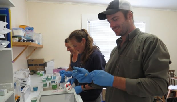 Sable Island horse fecal samples prepared in lab