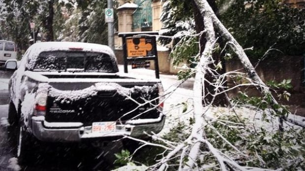 A fallen branch nearly hit this pickup truck in Calgary. The snow has been causing some major damage and power outages.