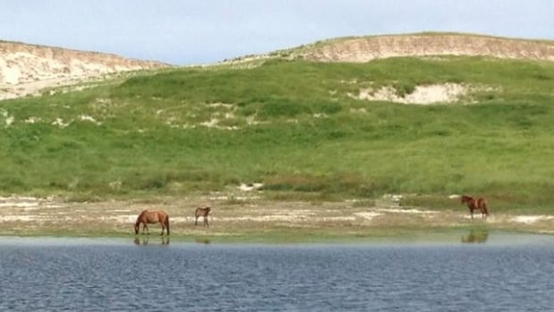 A freshwater lens, maintained by precipitation, underlies Sable Island forms the island's freshwater ponds.