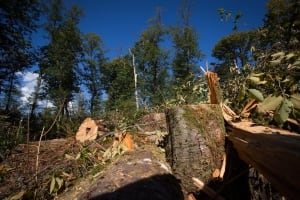 Trans Mountain Burnaby Moutain tree removal - Sept. 10, 2014
