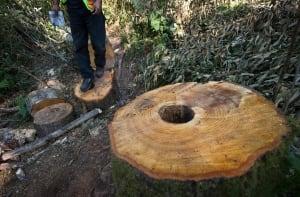 Trans Mountain pipelins survey work - Burnaby Mountain