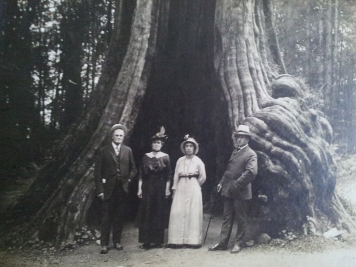 Hollow tree in Stanley Park catches fire | CBC News
